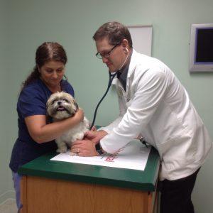Preventative Pet Health Care Canine Wellness