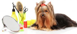 Dog grooming in Garrard County Kentucky