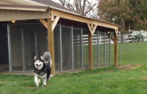 Outdoor Play Yard for Boarding Dogs