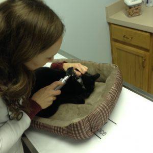 Pet Dermatology