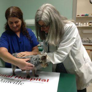 Senior Pet Wellness - Vet in Lancaster KY.jpg