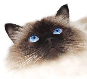 Preventative Pet Wellness Care