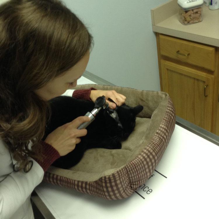 Danville Animal Hospital – Veterinary Care in Kentucky