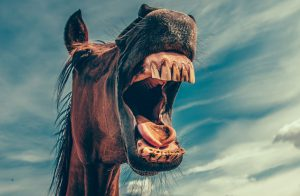 Equine Dental Care