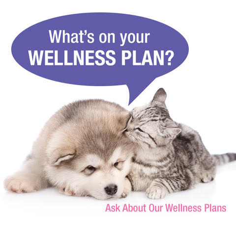 pet wellness plan